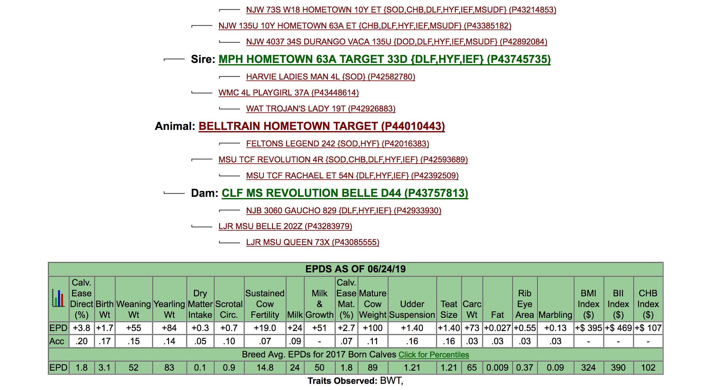 Registered Hereford Bull Belltrain Hometown Target