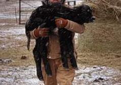 Save the heifer